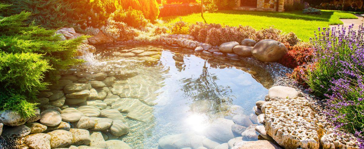 Schöner Teich gereinigt