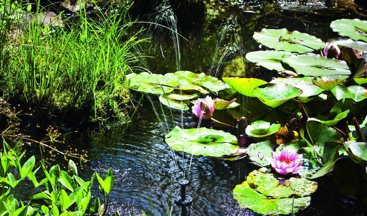 Fontäne im Teich