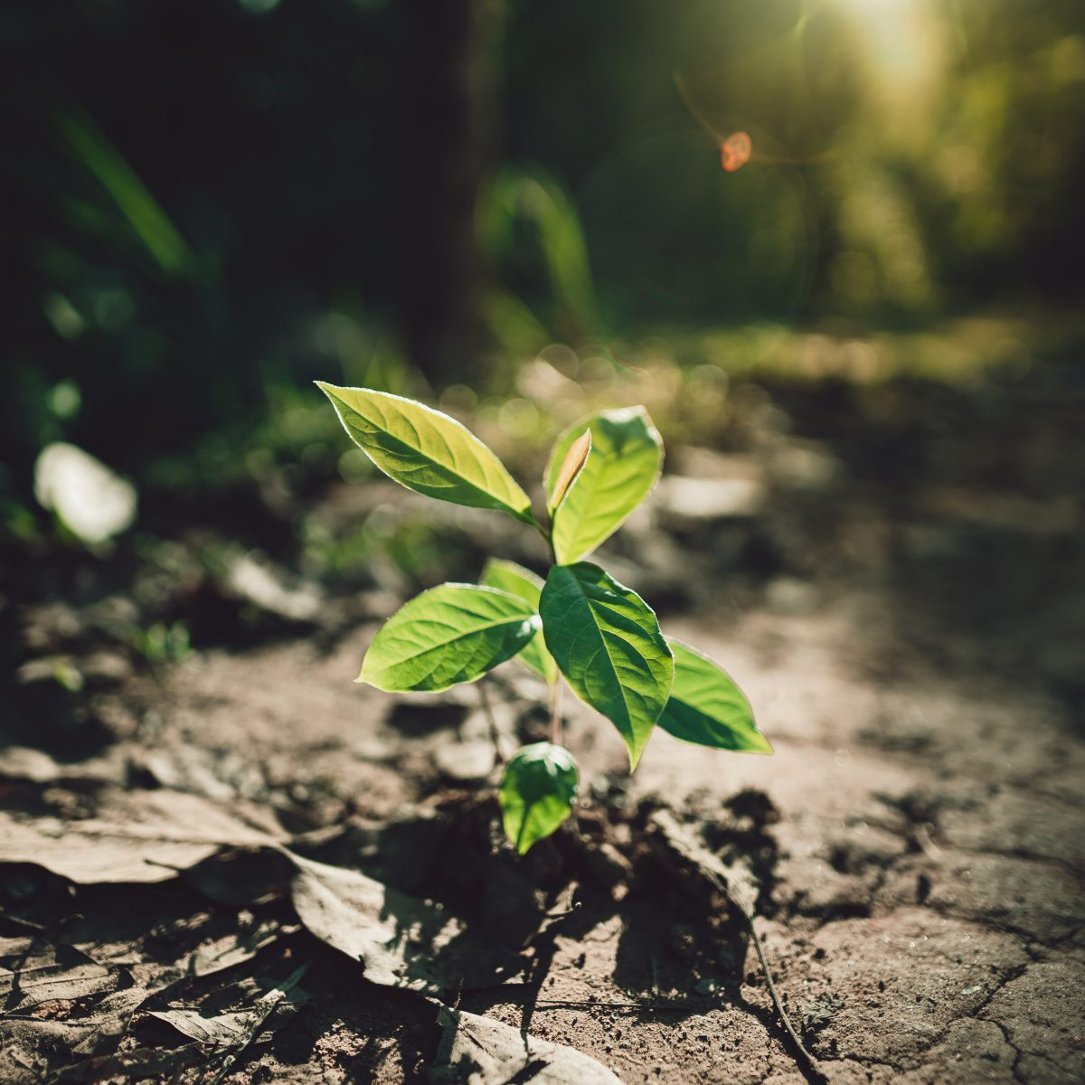 Pflanzenwachstum in der Erde