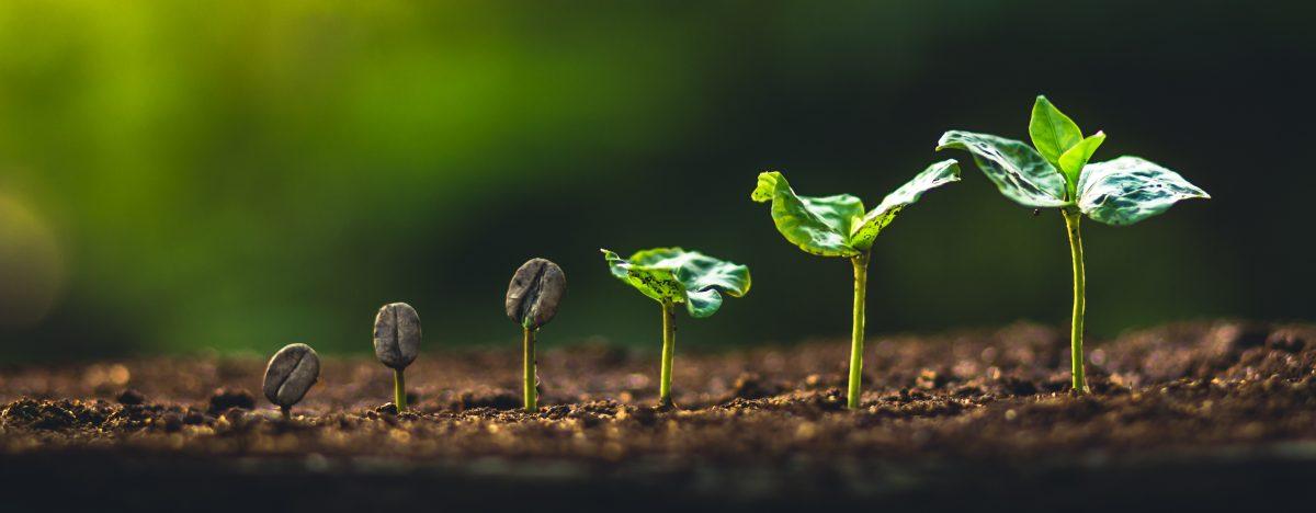 Wachsende Pflanze als Zeichen des Umweltschutz