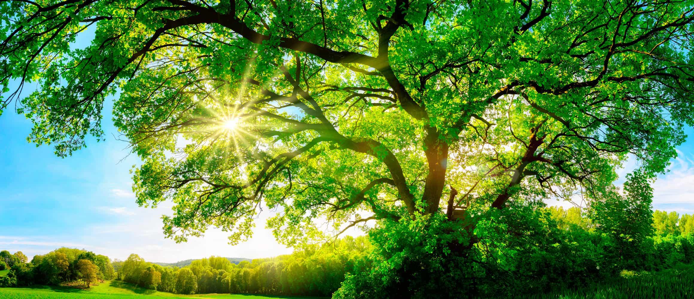 Ueberuns_Nachhaltigkeit_Banner_2320x1000