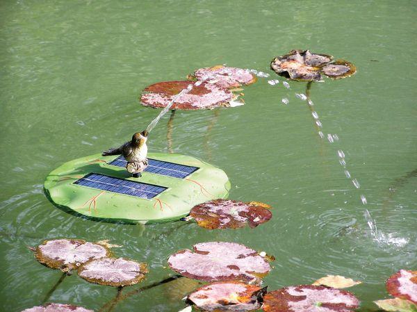 Seerosenaufsatz Vogel